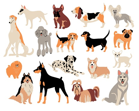 Vector cartoon dog breeds. Cute doodle illustration. Set of different dogs character