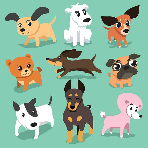 vektor cartoon hunde - schoßhunde stock-grafiken, -clipart, -cartoons und -symbole