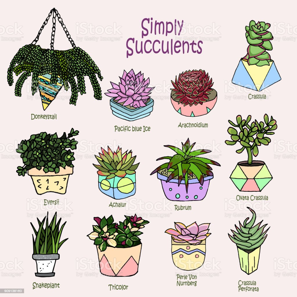 Vector Cartoon Doodle Illustration Collection Succulents Small Garden House Plants Background Wallpaper Template Backdrop Set Of Icons Stock Art