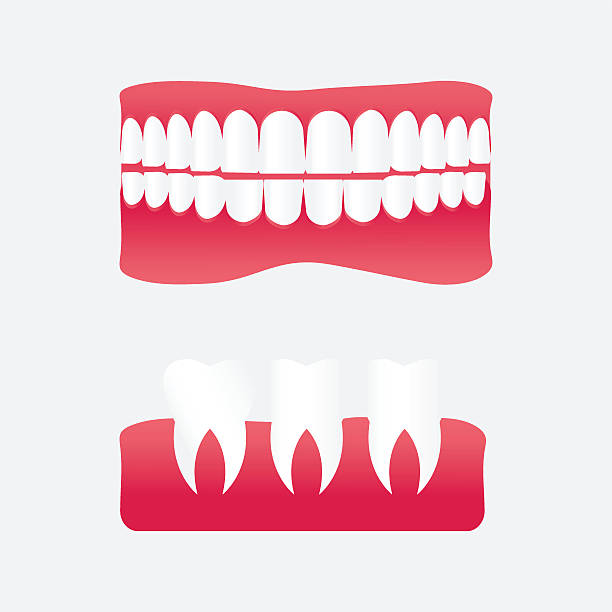 Best Teeth Model Illustrations, Royalty-Free Vector Graphics