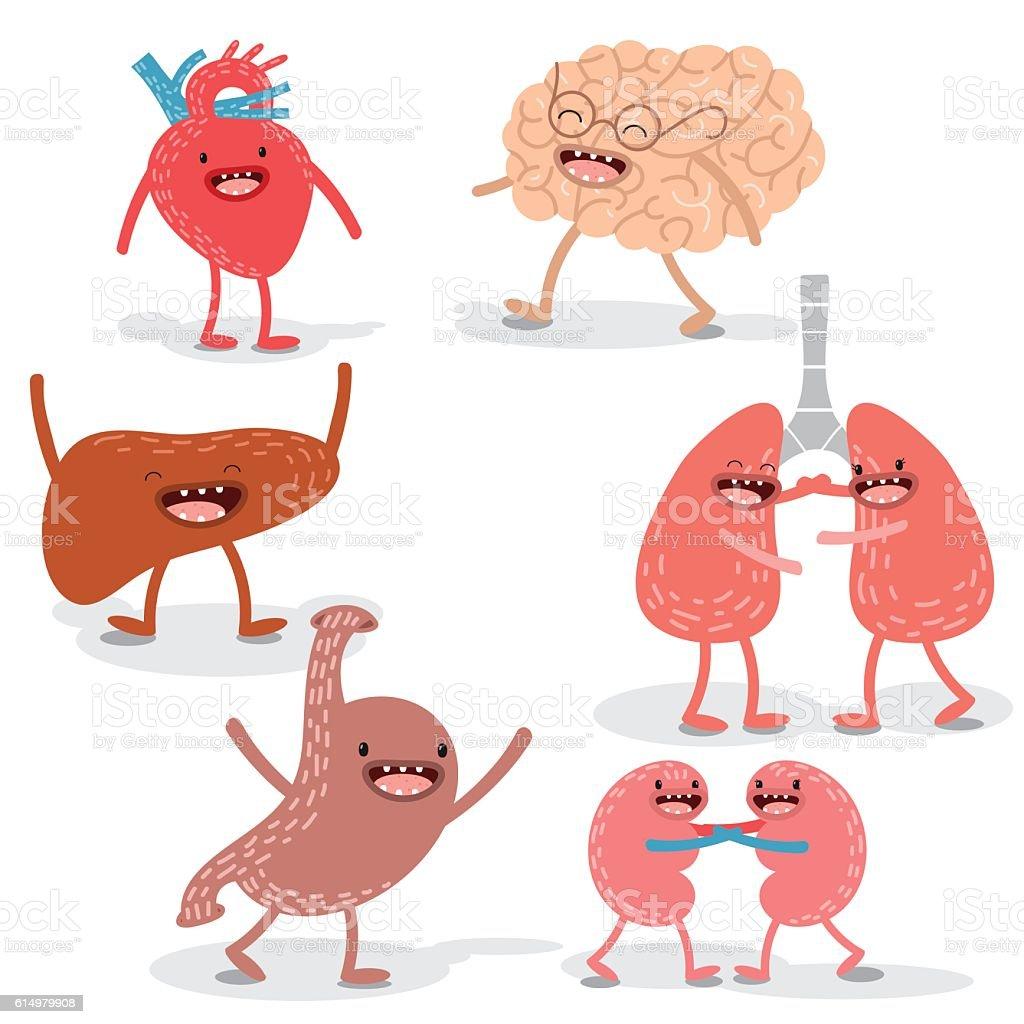 Vector Cartoon Human Anatomy Set Of Healthy Liver Heart Stock Vector