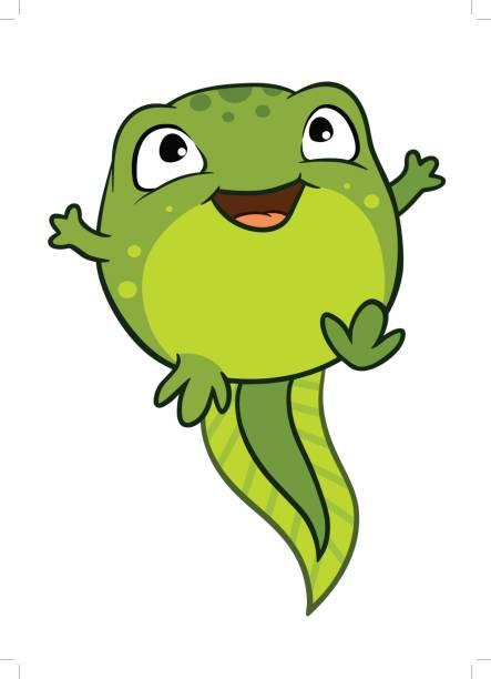 ilustraciones, imágenes clip art, dibujos animados e iconos de stock de ilustración de dibujos animados vector de caracteres de renacuajo lindo bebé alegre feliz, color verde brillante. - emoji emocionado