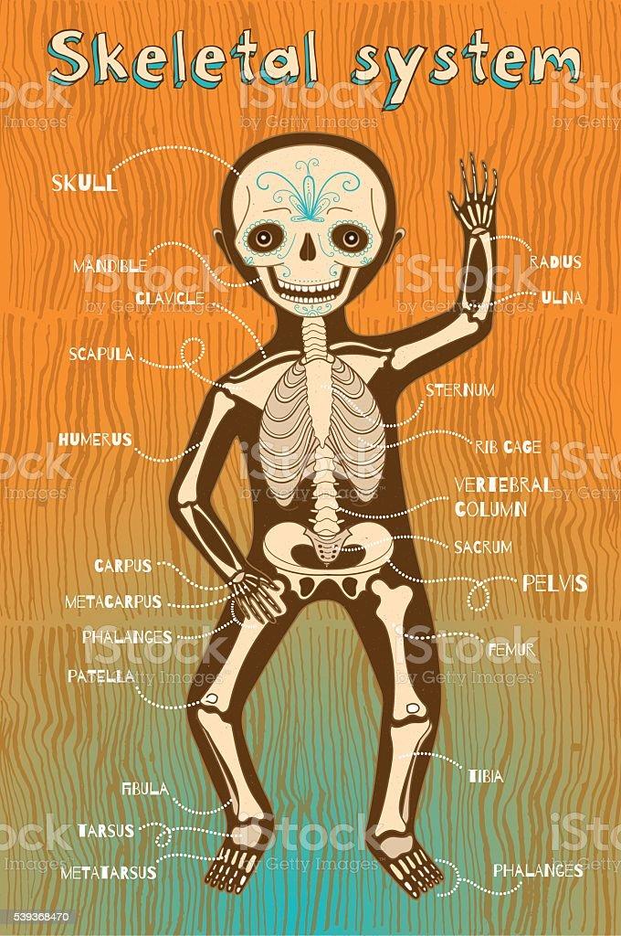 Vector Cartoon Illustration Of Human Skeletal System For Kids Stock
