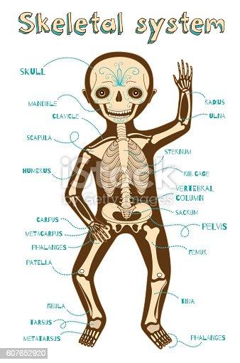 Vektorcomic Abbildung Eines Menschliches Skelett System Für Kinder ...