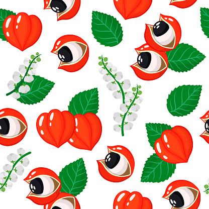 Vector cartoon seamless pattern with Paullinia cupana or Guarana exotic fruits, flowers and leafs on white background