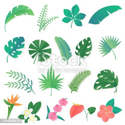 Vector cartoon set of isolated tropical leaves. Palm, banana leaf, hibiscus, plumeria flowers