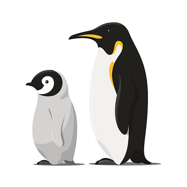 vector cartoon style illustration of penguins. - pinguin stock-grafiken, -clipart, -cartoons und -symbole