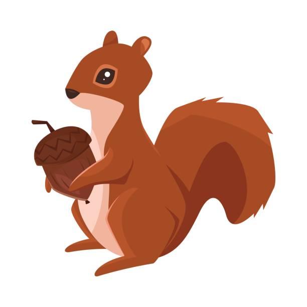 illustrations, cliparts, dessins animés et icônes de illustration de style dessin animé vectorielle d'écureuil avec gland - écureui