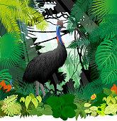 vector cassowary in jungle rainforest