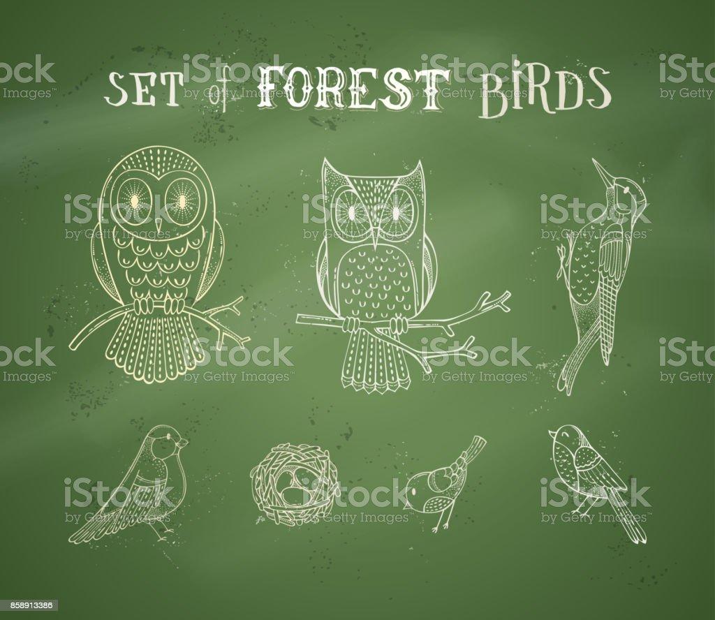 Vector chalk set of forest birds on blackboard background. vector art illustration