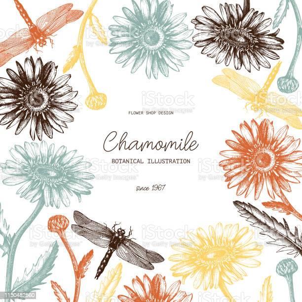 Vector chamomile design vector id1130482560?b=1&k=6&m=1130482560&s=612x612&h=n6inpluur d0wbk9vcvrybbnsamruwvfrenktkry0qm=