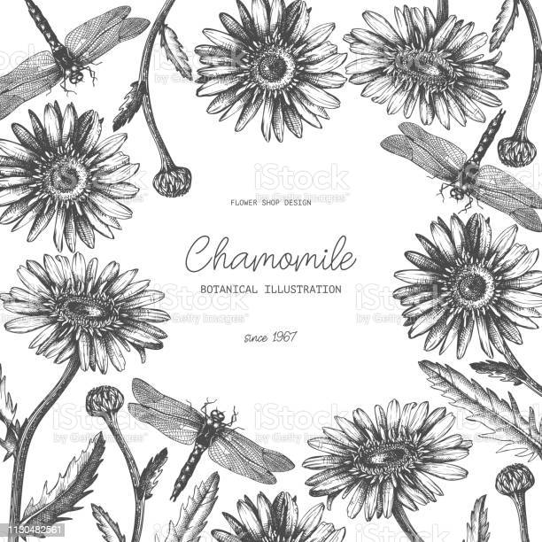 Vector chamomile design vector id1130482561?b=1&k=6&m=1130482561&s=612x612&h=xbm27a5wimcxxlipgozsupmivdr ahhgilxdiqo8b5w=