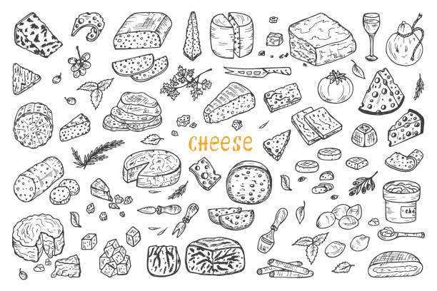 ilustrações de stock, clip art, desenhos animados e ícones de vector conjunto de queijo. mão desenhada sarrabisco vários tipos de queijo - queijo