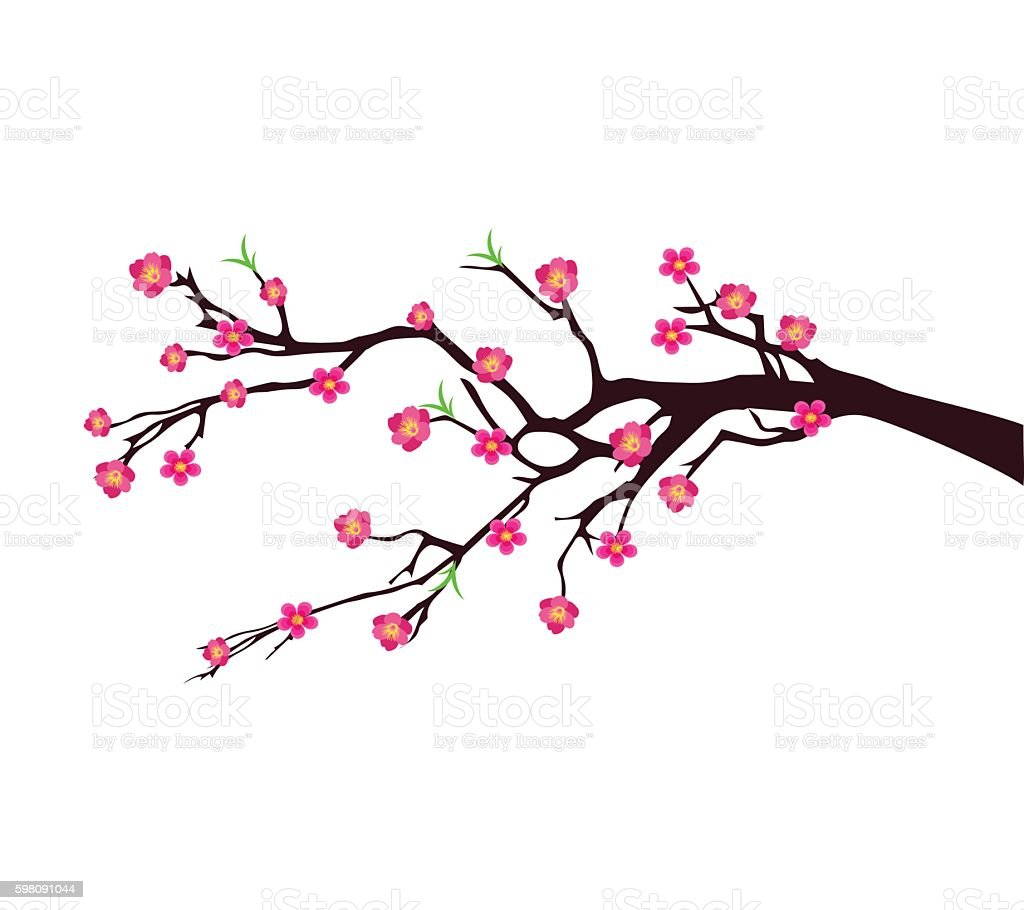 Vector Cherry Blossom For Chinese And Lunar New Year Stock ...