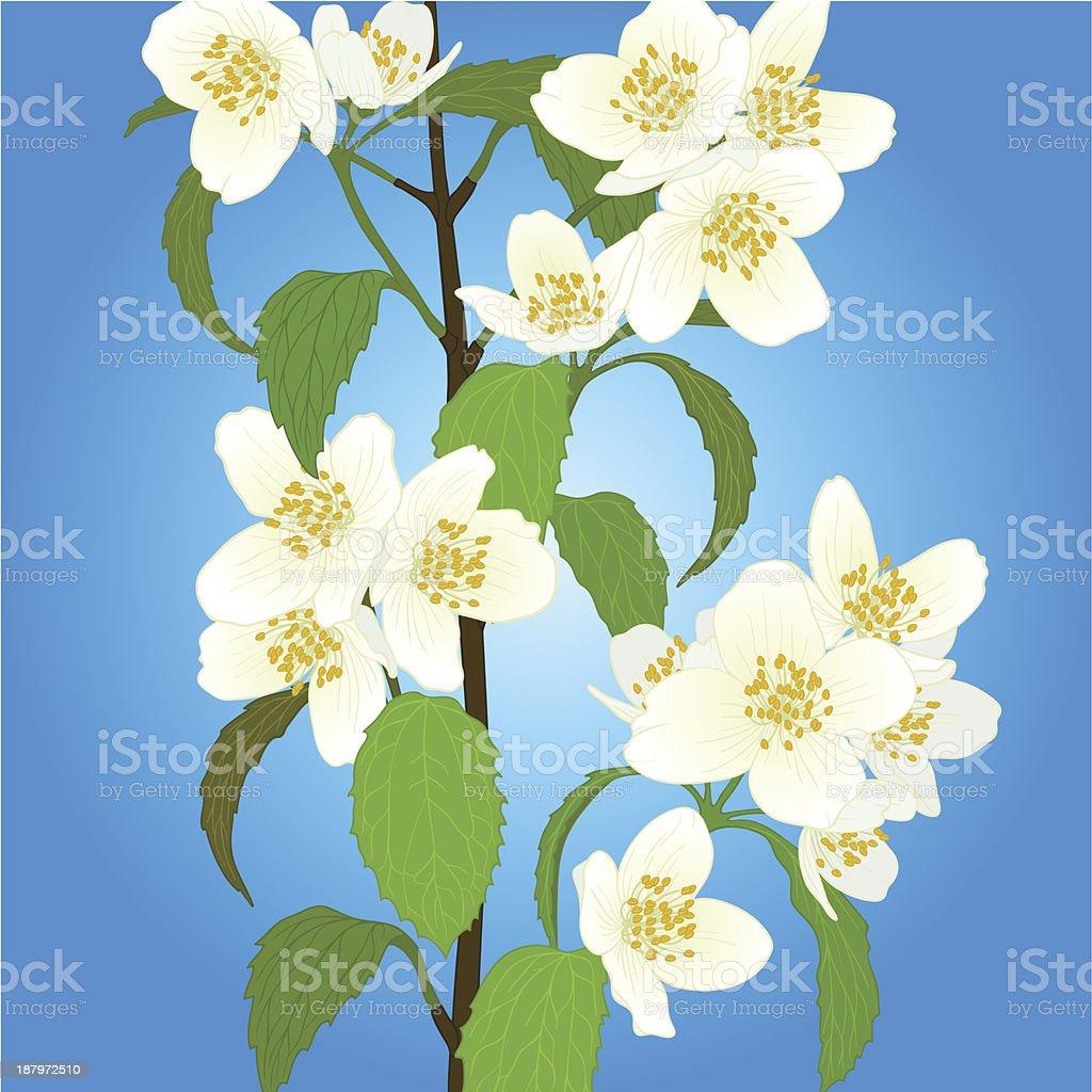 Vector cherry blossom. royalty-free stock vector art
