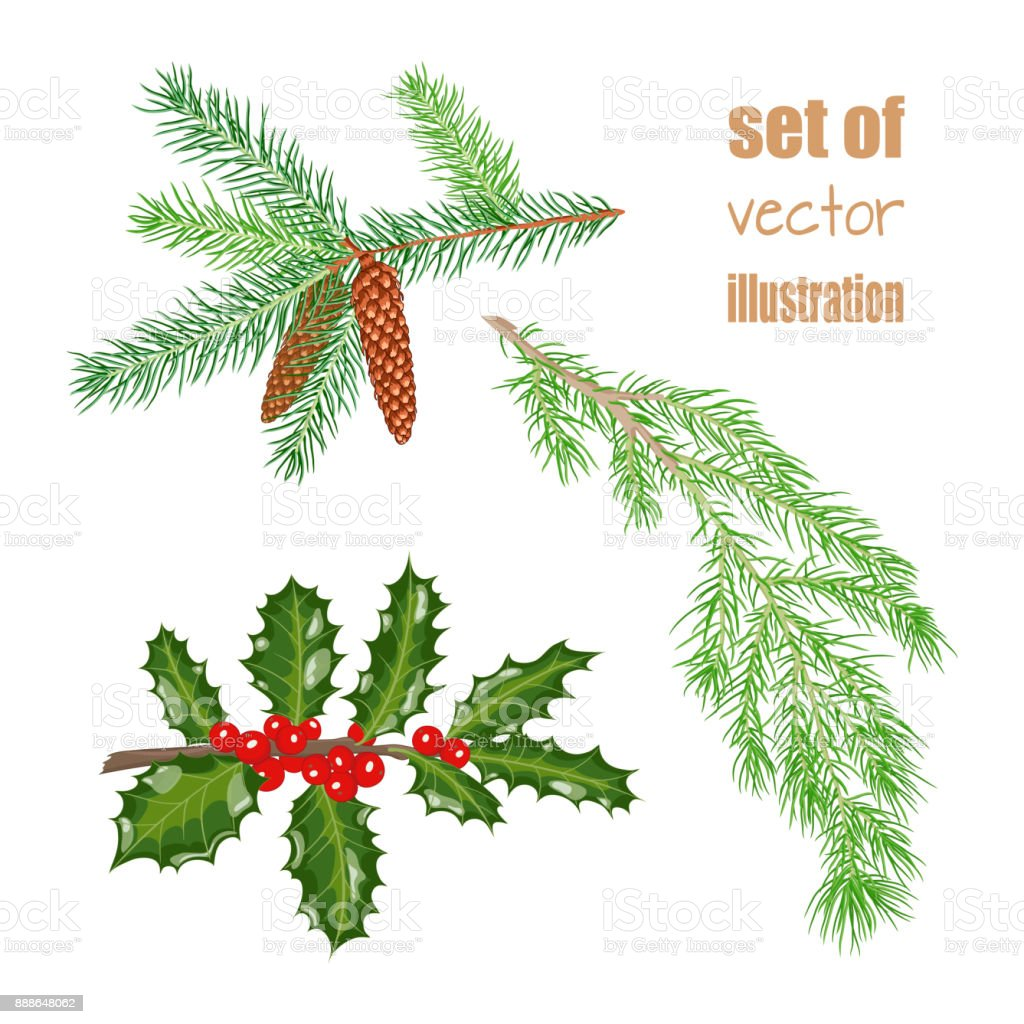 Christmas Branch Vector.Vector Christmas Branch Stock Illustration Download Image