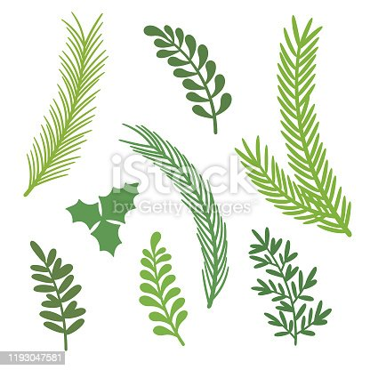 Vector Christmas Elements. Set of Christmas Tree Branches.