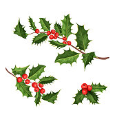 vector christmas holly mistletoe ilex leaves
