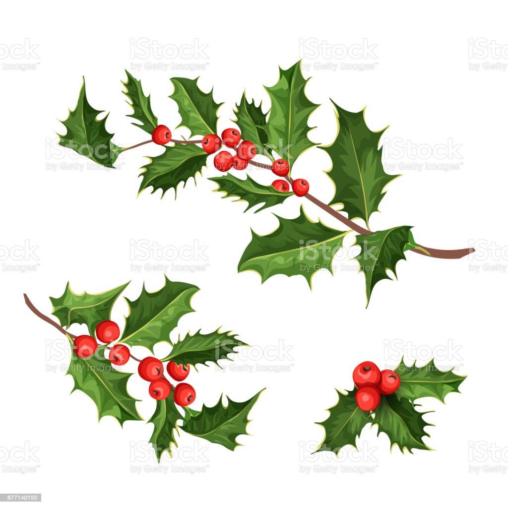 vector christmas holly mistletoe ilex leaves vector art illustration