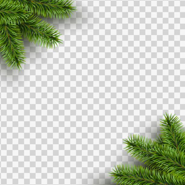 illustrazioni stock, clip art, cartoni animati e icone di tendenza di vector christmas square frame with pine branches in the corners on transparent background with space for design. - tavola natale