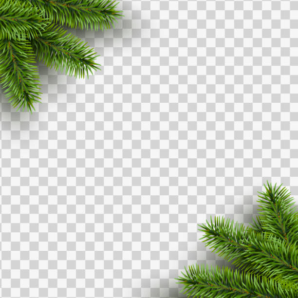 illustrazioni stock, clip art, cartoni animati e icone di tendenza di vector christmas square frame with pine branches in the corners on transparent background with space for design. - christmas table
