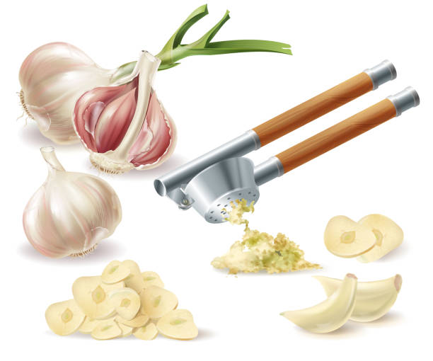 Vector clipart with garlic, cloves and metal press Vector clipart with sprouted head of garlic, peeled cloves, chopped slices and metal press, isolated on white background. Natural organic vegetable, spicy condiment, ingredient for eating and cooking garlic stock illustrations