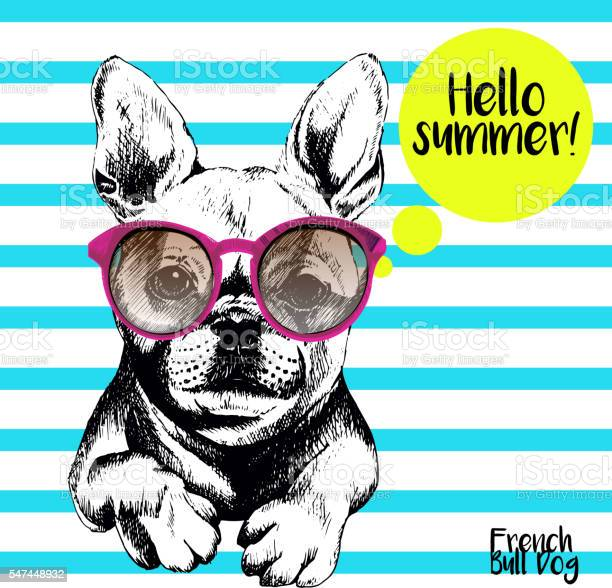 Vector close of french bulldog wearing the sunglassess vector id547448932?b=1&k=6&m=547448932&s=612x612&h= nj2pgbc93jhdgyk3hhcsjgolcfaf8v7vmizhxv9cci=