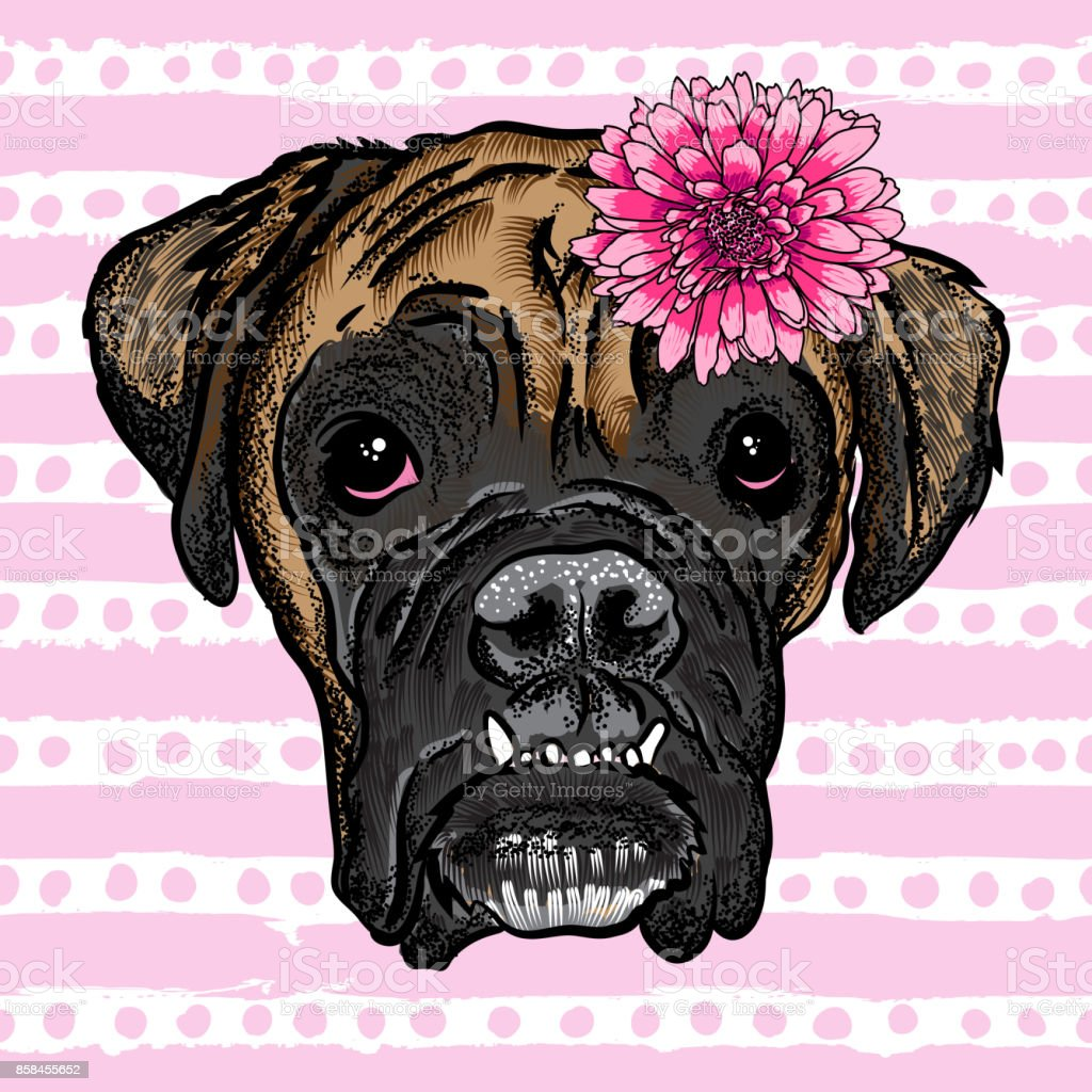 Vector close up portrait of Boxer bulldog wearing flower. Bright Hand drawn domestic pet doggy illustration. Isolated on pink grunge background with pink stripes and dots. vector art illustration