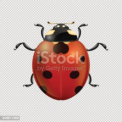 vector closeup realistic ladybug insect icon isolated design
