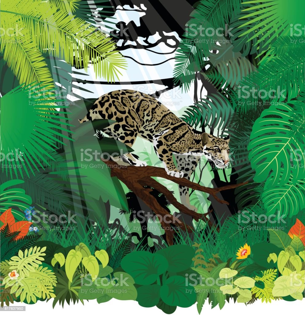 vector clouded leopard (neofelis nebulosa) in jungle rainforest vector art illustration