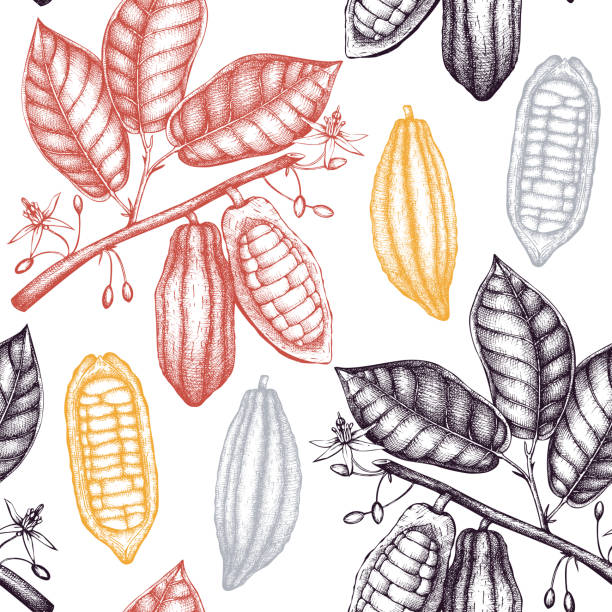 Vector cocoa pattern Vector Cocoa tree illustration. Vintage background with hand drawn with leaves, flowres, fruits and beans. Botanical seamless pattern. Aromatical and tonic elements sketch. hot chocolate stock illustrations