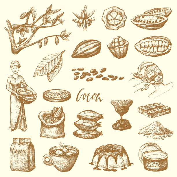 vector cocoa products handdrawn sketch doodle food chocolate cacao production sweet illustration - plant pod stock illustrations