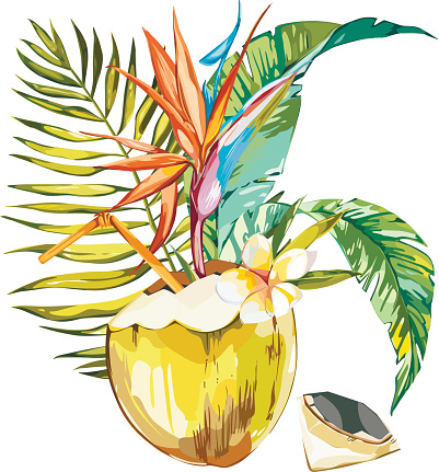 Vector coconut hand drawn sketch with palm leaf, plumeria and a pink hibiscus flowers. Watercolor vector tropical food illustration. Isolated on white background.