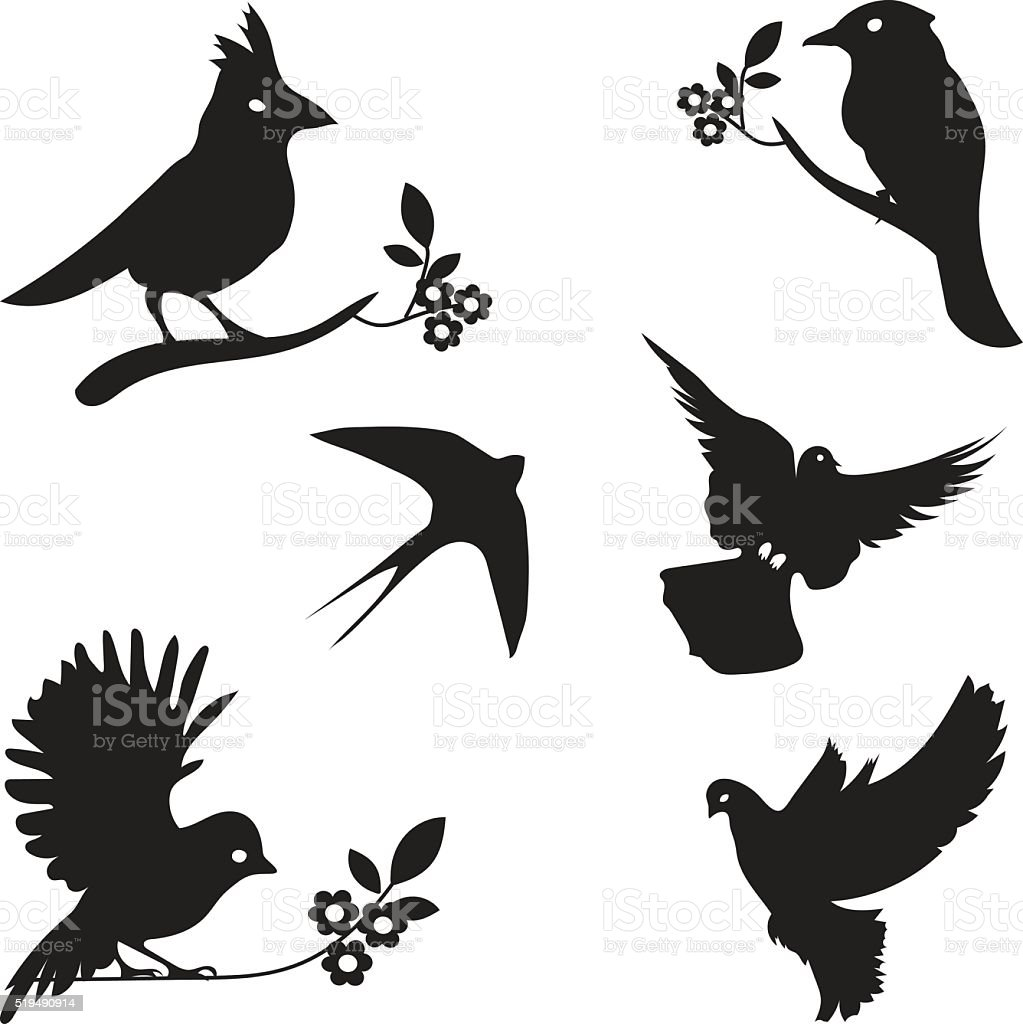 coleção de vetores de silhuetas de pássaros arte vetorial de stock