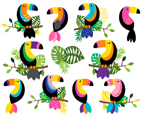 Vector Collection of Bright and Colorful Toucans and Tropical Leaves