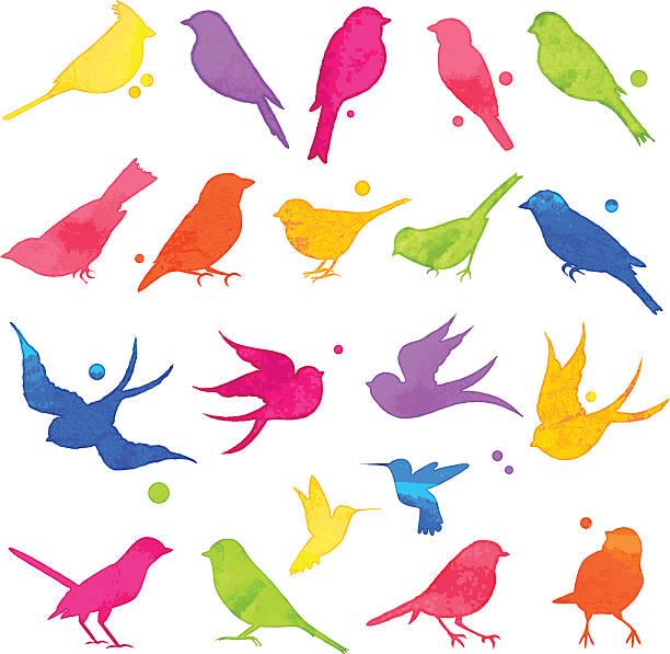 stockillustraties, clipart, cartoons en iconen met vector collection of bright watercolor bird silhouettes - neerstrijken