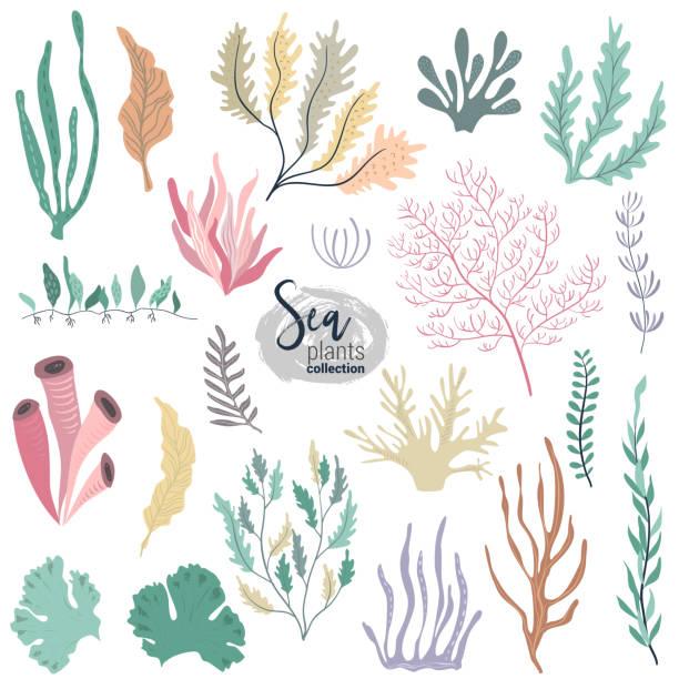 vektorsammlung von bunten unterwasserkorallen-riffpflanzen - algen stock-grafiken, -clipart, -cartoons und -symbole
