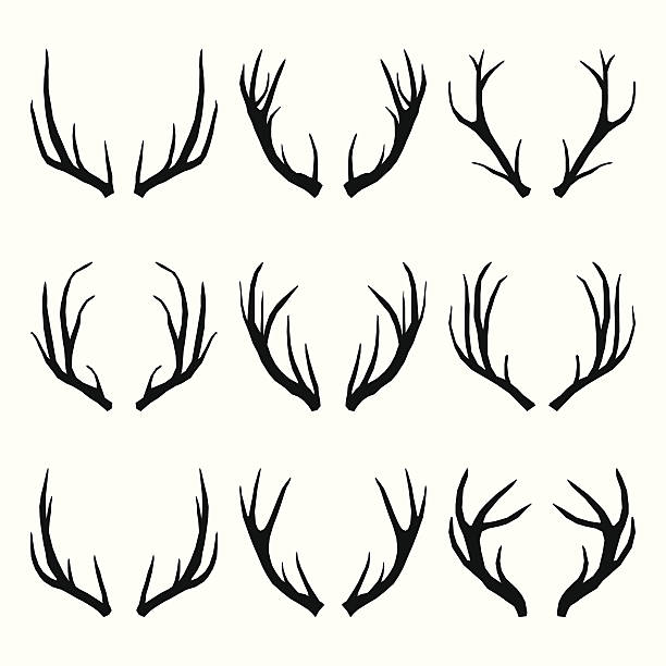 vector collection of deer horns - deer antlers stock illustrations, clip art, cartoons, & icons