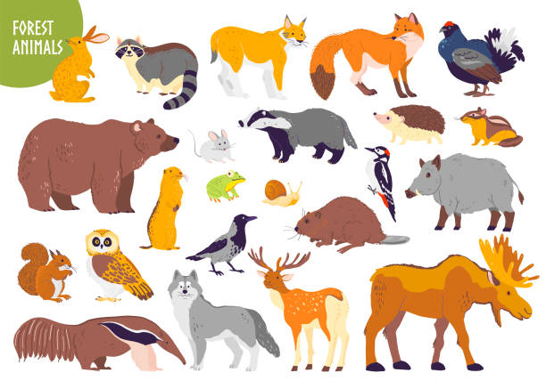 Vector collection of forest animals and birds: bear, fox, hare, owl isolated on white background Vector collection of forest animals and birds: bear, fox, hare, owl isolated on white background. Flat hand drawn style. Good for children book illustration, alphabet, woodland banner, zoo emblem etc. beaver stock illustrations