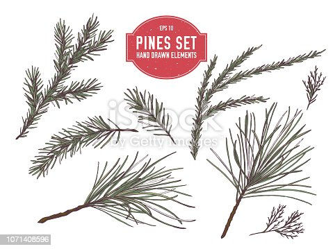 Vector collection of hand drawn colored  pine branch, spruce, redwood stock illustration