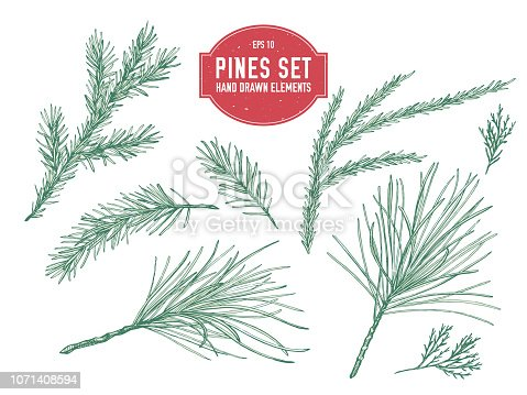 Vector collection of hand drawn pastel pine branch, spruce, redwood stock illustration