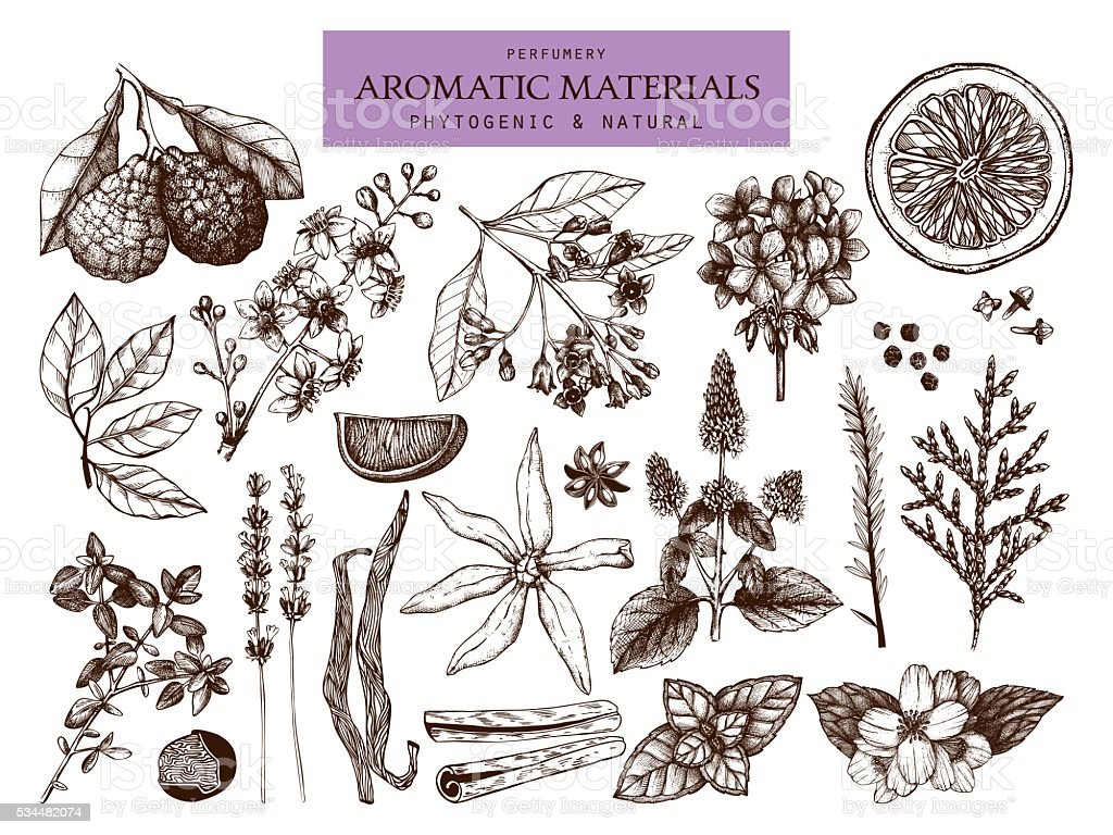 Vector collection of hand drawn perfumery and cosmetics materials sketch. vector art illustration