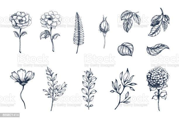 Vector collection of hand drawn plants botanical set of sketch and vector id859821414?b=1&k=6&m=859821414&s=612x612&h=ybthg cxuiuryc 9bfeqfdlof ksvitlyfjbbvzcx2u=