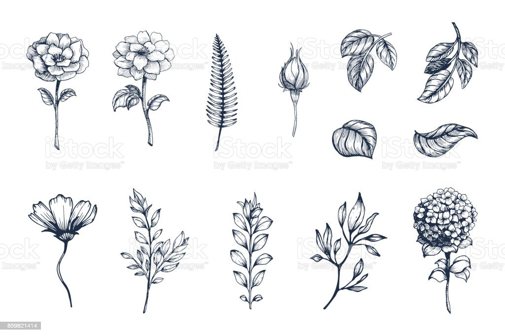 Vector collection of hand drawn plants. Botanical set of sketch flowers,  branches and leaves vector art illustration
