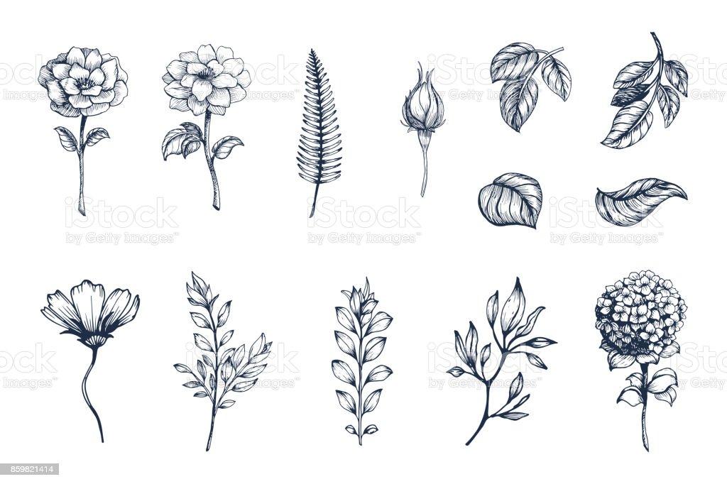 벡터 컬렉션의 손으로 그려진된 식물. 스케치 꽃의 식물 세트 가지와 잎 벡터 아트 일러스트