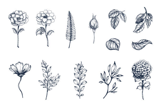 vector collection of hand drawn plants. botanical set of sketch flowers,  branches and leaves - botanika stock illustrations