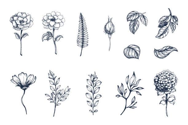 벡터 컬렉션의 손으로 그려진된 식물. 스케치 꽃의 식물 세트 가지와 잎 - 꽃 식물 stock illustrations