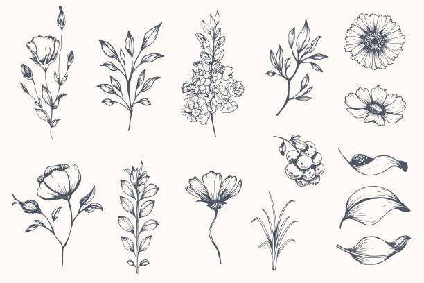 Vector collection of hand drawn plants. vector art illustration