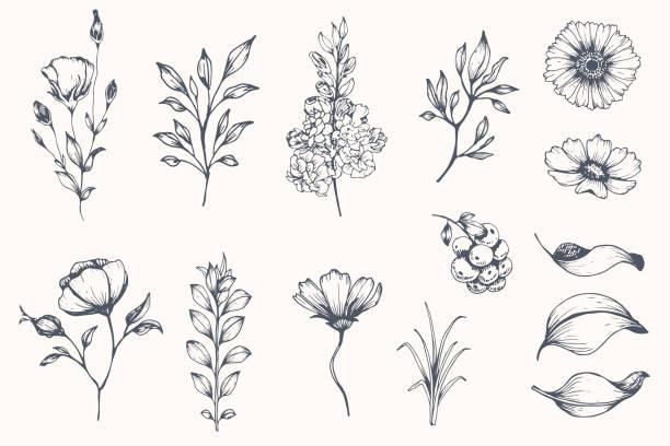 벡터 컬렉션의 손으로 그려진된 식물. - 꽃 식물 stock illustrations
