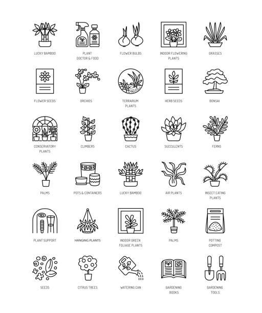 vektor-sammlung von zimmerpflanzen, gartengeräte und zubehör. verschiedene arten von blühenden und grünen blattpflanzen. linie-icon-set. - alpenveilchen stock-grafiken, -clipart, -cartoons und -symbole